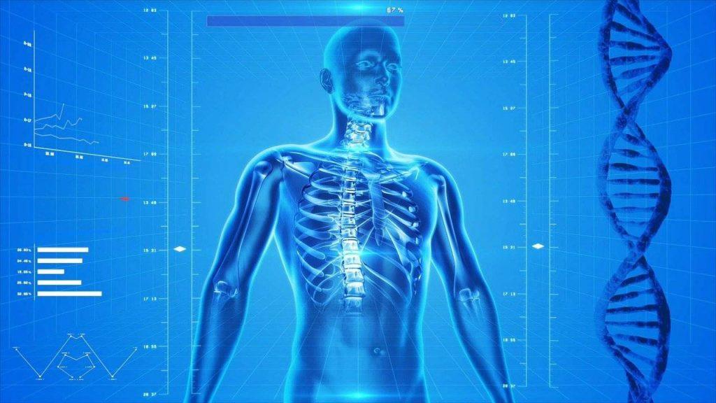 squelette haut du corps